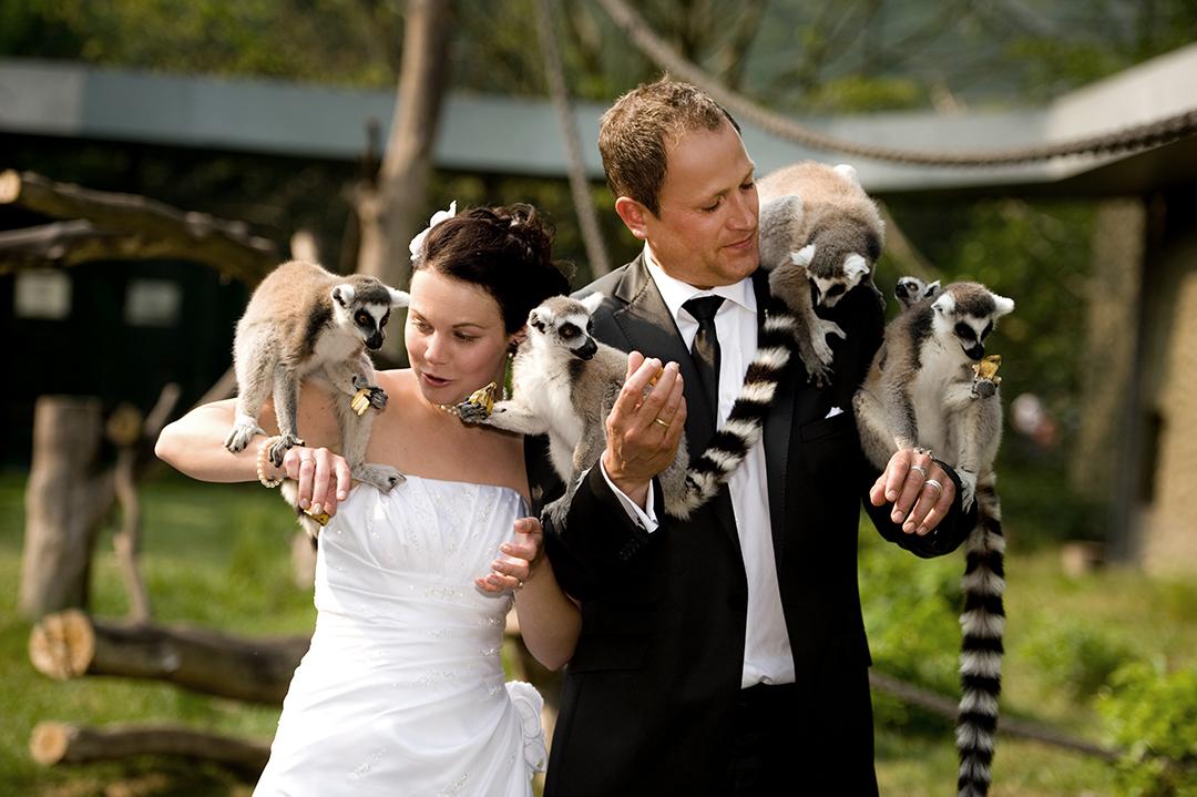 Rudek Fotografie Hochzeitspaar mit Meerkatzen